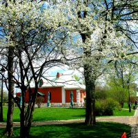 Весна в Царицыно, :: Владимир Драгунский