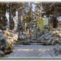 Зима по-сочински... :: СветЛана D