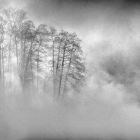 Туман :: Владимир Печенкин