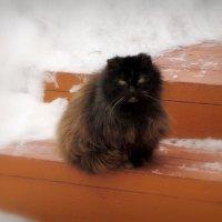 Котёнок :: Павел Галактионов