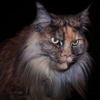 Кот или Кошка? :: Александр Валяев