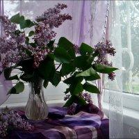 Сиреневый букет :: Нина Корешкова