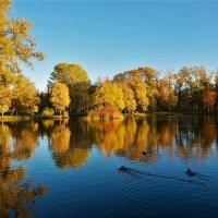 Золотой закат над Большим прудом... :: Sergey Gordoff
