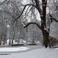 В зимнем парке тишина. :: Юрий. Шмаков