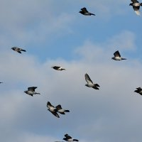 в полете :: linnud