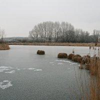 У замерзшего озерка... :: Kapris VS