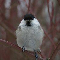 Что ты принёс птице?! :: Boris Antonov