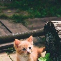Котенок :: Ксения Лабуш