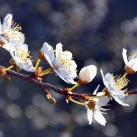 Хочется весны! :: Nina Streapan