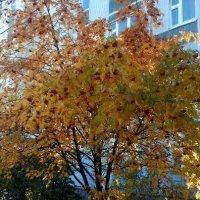 Желтая осень :: Юлия Шабалдина