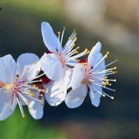 Ах, весна... :: Nina Streapan