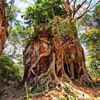 храм в джунглях :: Ingwar