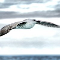 Рожденный летать :: Носов Юрий