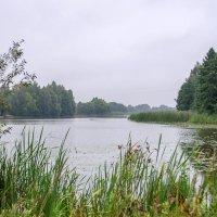 На речке Свишень :: Сергей Тарабара