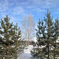 Пейзаж с берёзкой :: Николай Масляев