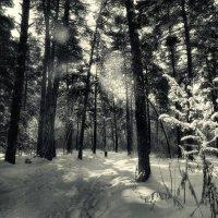 лес :: Виктор Сосунов