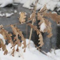 Осенью и зимой одним цветои. :: Вячеслав Медведев