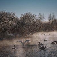 Лебединое озеро :: Ольга Сапцина