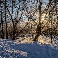 Февральское утро :: Андрей Дворников