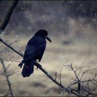 Ворона сидит на ветке. Зимняя природа :: Екатерина Шиманская