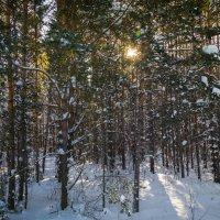 Зимний лес :: Сергей Говорков