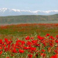 Весна в предгорьях Тянь-Шаня. :: Дмитрий Ш