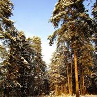 Вечером у леса :: Андрей Снегерёв