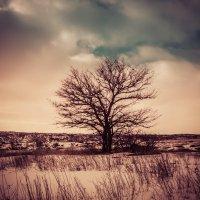 Дерево :: Александр Шевченко