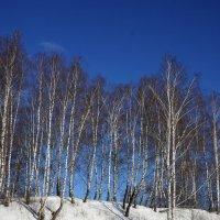 Нежность зимы :: Ольга Чистякова