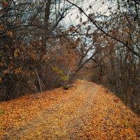 Дороги Осени :: Александр Афромеев
