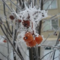 колючий мороз :: Василий Аверкиев