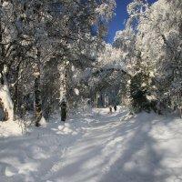 На прогулку в зимний лес! :: Галина Ильясова