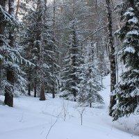 Лесные красавицы, от мала до велика. :: Наталья Юрова