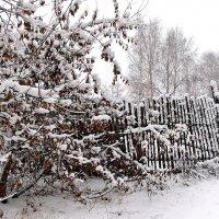 Снегопад мелодией мгновений... :: Лесо-Вед (Баранов)