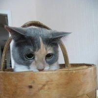 Как удобно в корзиночке! :: Татьяна