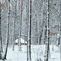 домик в лесу :: Татьяна