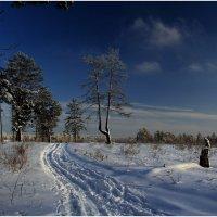 Лыжная прогулка :: generalov545