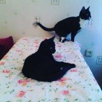 Ах, в жизни так много всего интересного и для кошечек особенно! :: Ольга Кривых