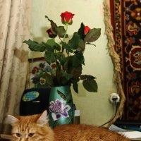 Белка и розы :: Николай Холопов