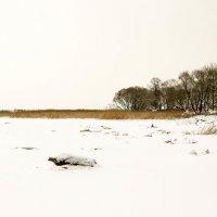 На берегу Финского залива :: Петр
