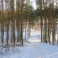 Лесная лыжня :: Анатолий Клепешнёв