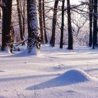 Январь :: Виктор Берёзкин