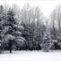 И  в  парке  тоже зима.... :: Валерия  Полещикова