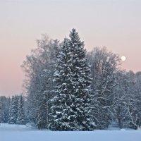 в Павловском лесу :: Елена