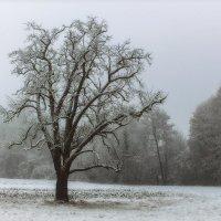 Надоело одиночество… Пробираюсь сквозь туман… :: Юрий. Шмаков