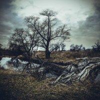 упавшее дерево :: Алина Гриб