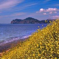свет, цвет, цветы, диагональ, море, горы, небо...Крым :: viton