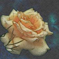 Жёлтая роза... :: Пётр Сухов