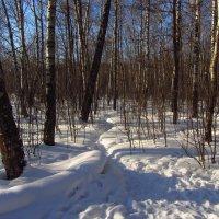 В феврале и морозный день похож на весну :: Андрей Лукьянов