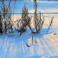 Тени на снегу :: Николай Масляев